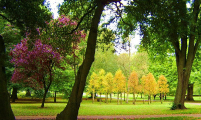 Bute Park | Cardiff, Wales