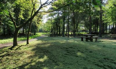 Haldon Forest Park | Exeter