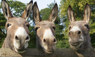 The Donkey Sanctuary | Sidmouth, Devon