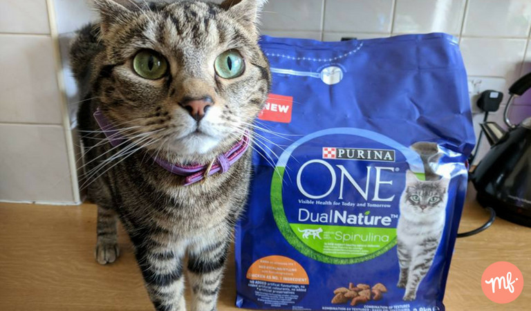 Free cat pet food, bag of Purina on counter with tabby cat staring at camera lens