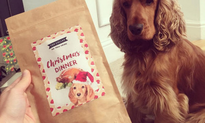 Free Dog's Christmas Dinner Treats