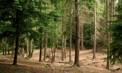 Alice Holt Forest | Farnham, Surrey