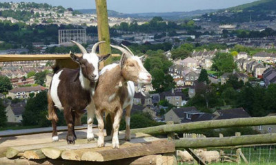 Bath City Farm | Bath