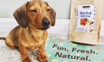 Free Box of Dog Treats