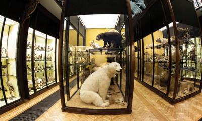Natural History Museum | Tring, Hertfordshire