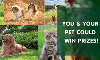 Free John Lewis Voucher & Pet Food Bundle