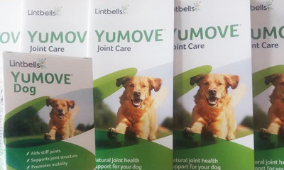 Free YuMove Joint Supplement for Dogs