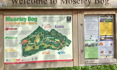 The Tolkien Trail | Moseley Bog, Birmingham