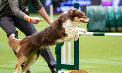 Win a Pair of Tickets to Crufts