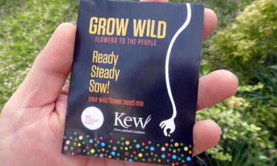 Free Wildflower Seed Packs