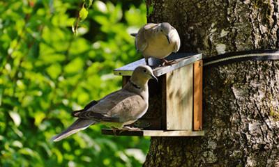 Free Bird House