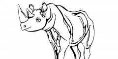 Free Animal Colouring-In Pages