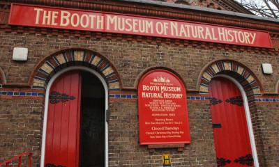 Booth Museum | Brighton, East Sussex