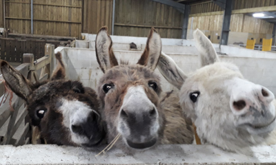 The Isle of Wight Donkey Sanctuary | Wroxall, Isle of Wight