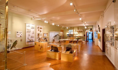 Derby Museum & Art Gallery | Derby, Derbyshire