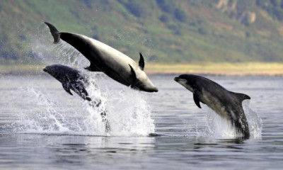 Watch Dolphins at Chanonry Point | Highlands & Islands, Scotland