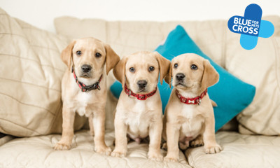 Free puppy guidance and advice