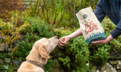 Free Dog Food from Bug Bakes