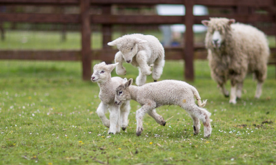 St James City Farm | Gloucester, Gloucestershire