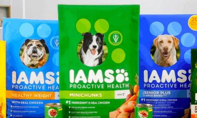 Free IAMS Dog Food