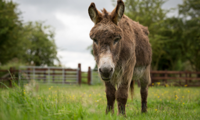 Radcliffe Donkey Sanctuary | Alford, Lincolnshire