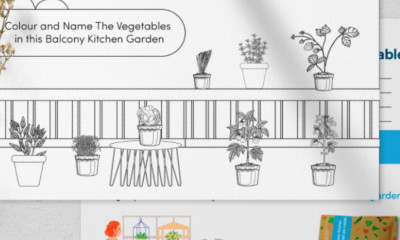 Free Vegetable Postcards for Kids - 10,000 Available