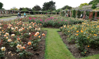 Southsea Rose Garden | Portsmouth, Hampshire