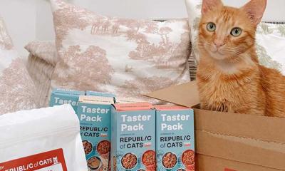 Massive Cat Food Box for £3 + Free Bag of Treats