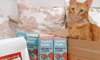Massive Cat Food Box for £2.50
