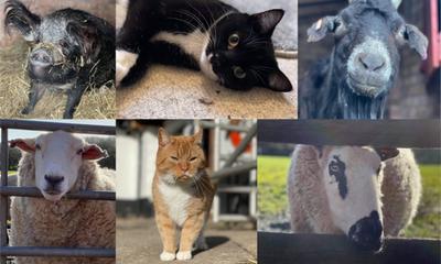 Redgate Farm Animal Sanctuary | Markfield, Leicestershire