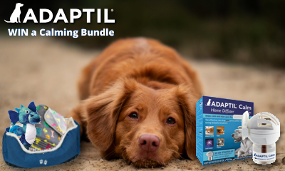 Win a Dog Bed, Toy, Blanket and More