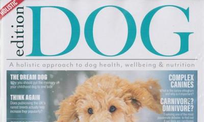 "<span class=""merchant-title"">Edition Dog</span> | Free 2020 Dog Calendar"