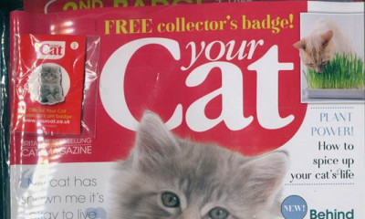 "<span class=""merchant-title"">Your Cat</span> 
